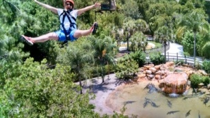 Zipline above Gators in the USA